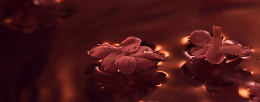 Flowers Universe