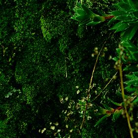 Around the Wood